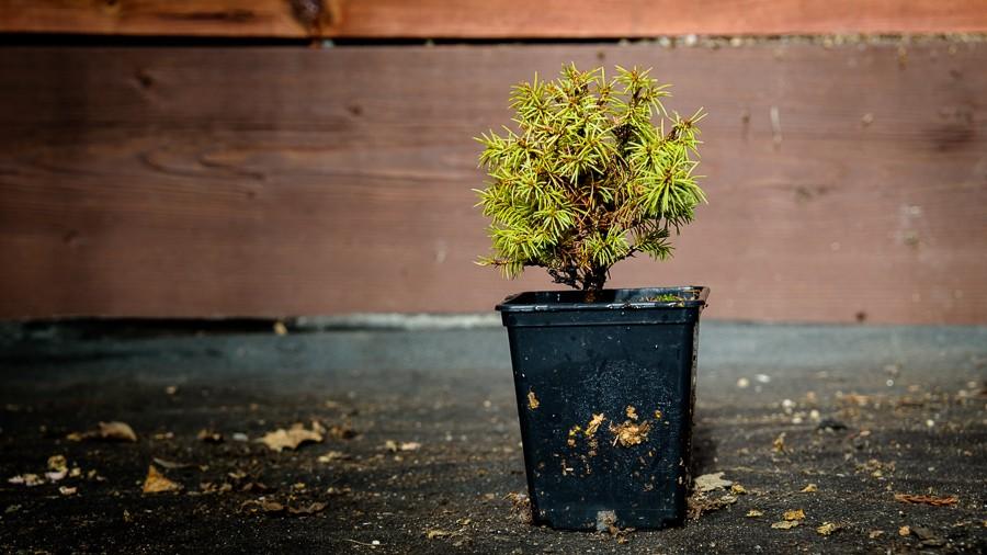Pěstujeme pro vás odolné rostliny na Šumavě v nadmořské výšce 800 m
