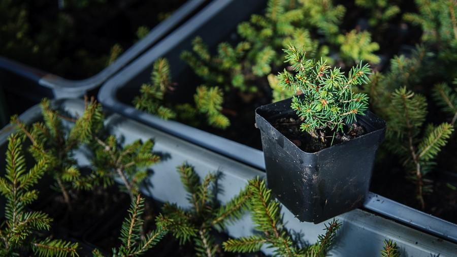 Každé rostlině se věnujeme od semínka až po sazenici